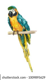 Watercolor image of blue-and-yellow macaw on white background