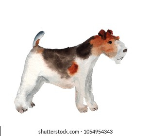 Watercolor image of fox terrier on white background