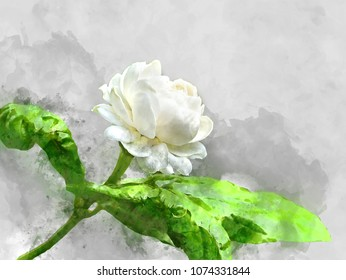 Watercolor image of jasmine flower with leaves
