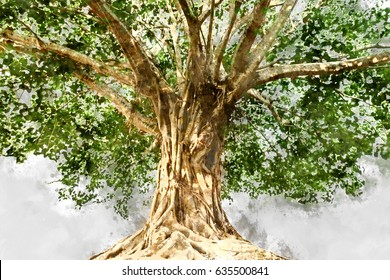 Watercolor image of Large Bodhi tree.