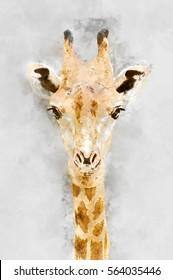 Watercolor image portrait of Giraffe