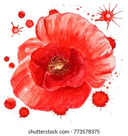 Watercolor image of red poppy flower with paint blots on white background