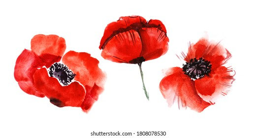 Watercolor image of three blurred poppy flowers isolated on white background. Blooming bright scarlet heads with black hearts. Hand drawn illustration of wild field flora