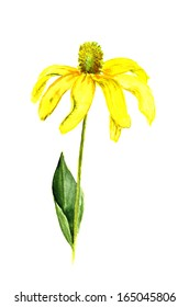 Watercolor image of yellow flower on white background
