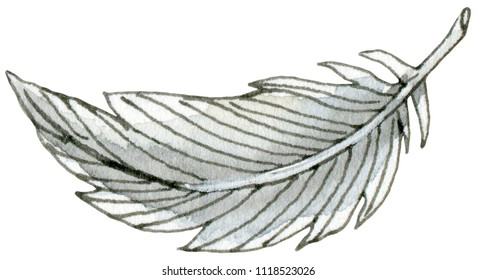 Watercolor and ink illustration of feather. Hand drawn object. Vingardium leviossa!