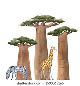 Watercolor isolated illustration. Baobab trees on a white background, giraffe and zebra. African illustration