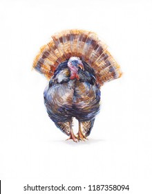 Watercolor  isolated turkey bird. Thanksgiving turkey on white background. The symbol of Thanksgiving.
