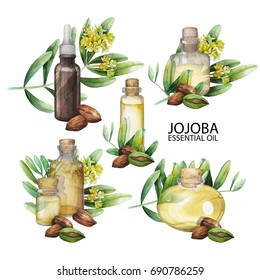 Watercolor jojoba design. Hand pained oil bottle decorated with seeds, leaves and flowers. Herbal medicine