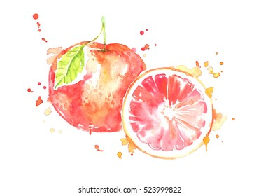 Watercolor juicy grapefruit with green leaf.