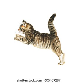 Watercolor jumping fluffy kitten. Hand drawn grey tabby main coon kitten. Painting isolated pets illustration on white background