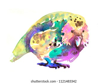 watercolor kakapo bird artwork