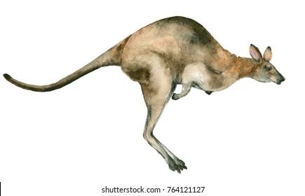 Watercolor kangaroo isolated on white background. Australian kangaroo watercolor illustration.