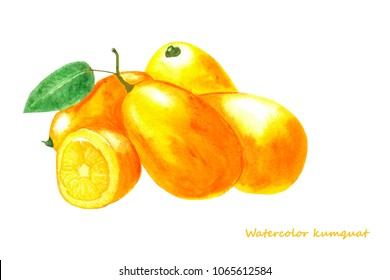 Watercolor kumquat. Isolated citrus fruit illustration on white background