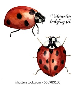 Watercolor ladybug set. Collection with ladybird. Insect illustration isolated on white background. For design or print.