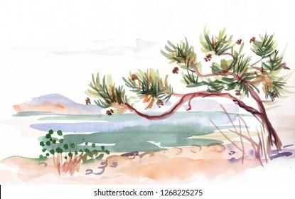 watercolor landscape with pine  near sea