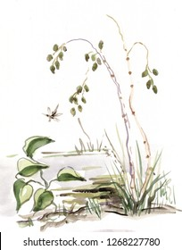 watercolor landscape withbirchs and plants near pond