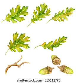 Watercolor  leaves, branches and acorns. Hand drawn illustration.