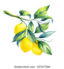 watercolor lemon branch on white background