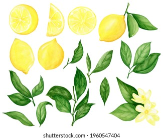 Watercolor Lemon Clip Art. Lemons Set. Watercolor Fruit Citrus Painting, Half, Wedge Lemons, Lemon Leaves and Flowers. Bright, Yellow.