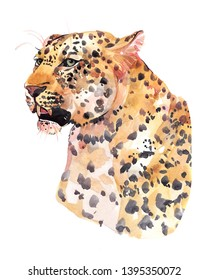 Watercolor leopard big cat animal illustration isolated on white background