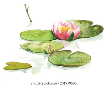 Watercolor light pink water-lilly flower in pond with branch and round leaves