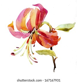 Watercolor lilly flower