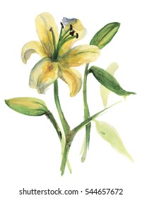 Watercolor lily flower. Hand drawn element for your design.