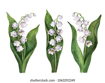 Watercolor lily of the valley set, hand drawn illustration of spring flowers isolated on a white background.