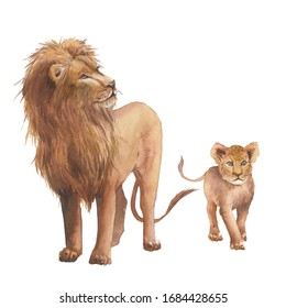 Watercolor lion family. Wild animals isolated on white background. African predator clip art