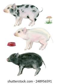 Watercolor little pigs.