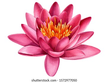 watercolor lotus flowers art, asian, backdrop, background, beautiful, beauty, bloom, blooming, blossom, botanical, botany, bud, closeup, collection, color, decoration, design, drawing, elegance, exoti