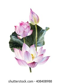 watercolor lotus flowers illustration