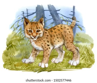Watercolor lynx cub on forest background. Hand Painted bobcat. Illustration isolated on white.