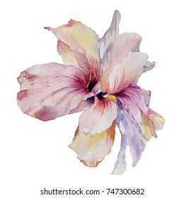 Watercolor magic hand-drawn tropical exotic flowers and green leaves.Colorful bright wild plants on a white background.Pink,rose,yellow,violet petals.Greeting,invitation,wedding card.