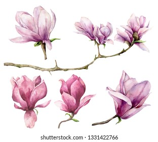 Watercolor magnolia and branch set. Hand painted flowers isolated on white background. Floral elegant illustration for design, print