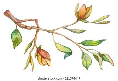 Watercolor magnolia. Raster illustration.