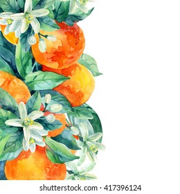 Watercolor mandarine orange fruit card with leaves and blossom  on white background. Orange citrus tree. Mandarin bloom. Tangerine with leaves, branch, flower. Hand painted illustration