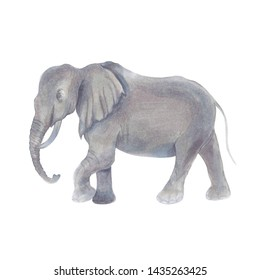 Watercolor marker cute realistic illustration of African elephant.