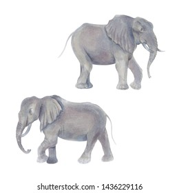 Watercolor marker cute realistic illustration of two African elephant.