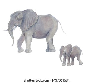 Watercolor marker cute realistic illustration of two African elephant with baby