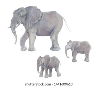 Watercolor marker cute realistic illustration of African elephant with two baby
