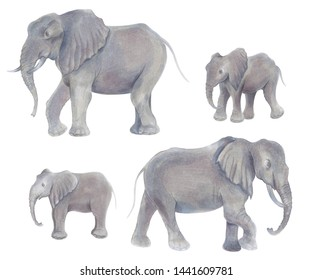 Watercolor marker cute realistic illustration of African elephant with baby