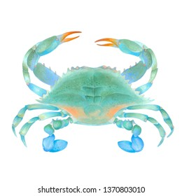 Watercolor marker illustration of blue colorful crab. Hand drawn. Isolated on white