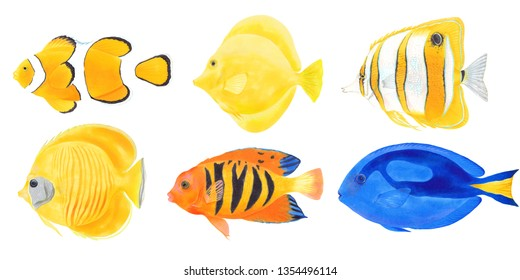 Watercolor marker illustration set of Clown, Butterfly , Flame Angel , Blue Tang , Yellow Tang fishes.