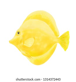 Watercolor marker illustration of Yellow Tang Fish. Hand drawn. Isolated on white background. Yellow