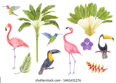 Watercolor marker tropical bird, trees, flowers and leaves. Toucan flamingo colibri birds, orchid flowers, areca palm heliconia flower. Cololful tropic background isolated on white.