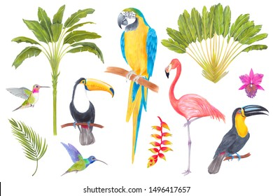 Watercolor marker tropical bird, trees, flowers and leaves. Toucan flamingo colibri macaw parrot birds, orchid flowers, areca palm heliconia flower. Cololful tropic background isolated on white.