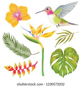 Watercolor marker  tropical colibri bird with orchid flower, bamboo leaves, strelitzia flower, heliconia flower, philodendron leaf, areca palm.