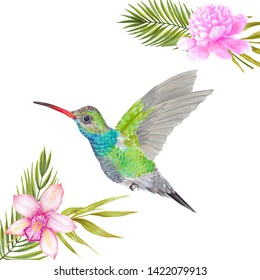 Watercolor marker  tropical colibri hummingbird with orchid and peony flower, bamboo leaves, areca palm.