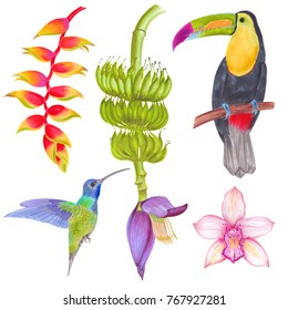 Watercolor marker tropical orchid and banana flowers and banana tree with colibri bird and toucan bird. Colorlful tropic background isolated on white.